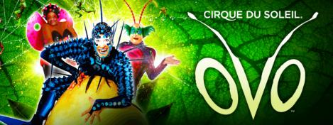 Cirque ovo
